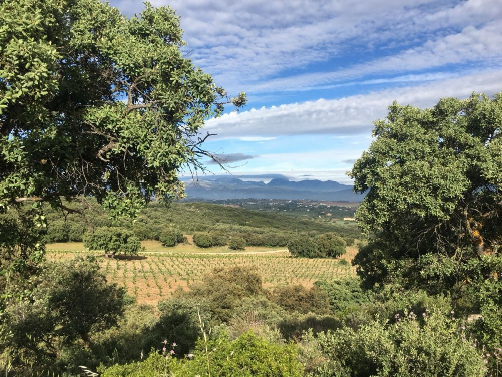 Farmhouse for sale in Ronda in Ronda